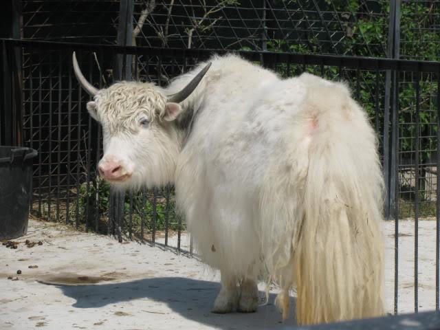 фото животного як: